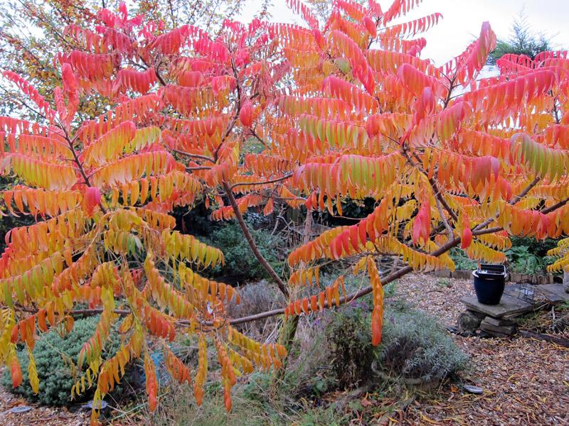 MWTree Autumn2.jpg