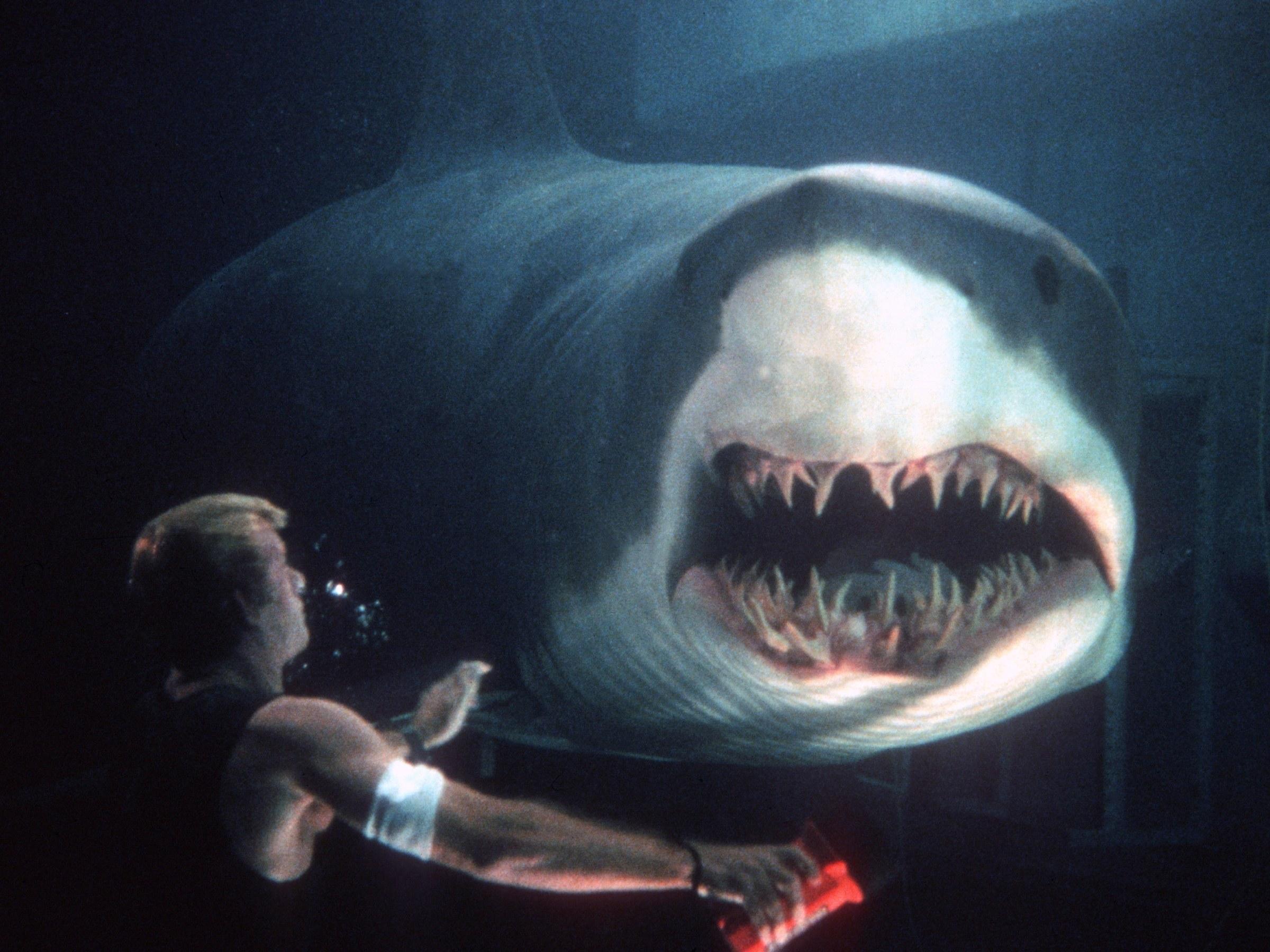 SharkTA-DXNRE3.jpg