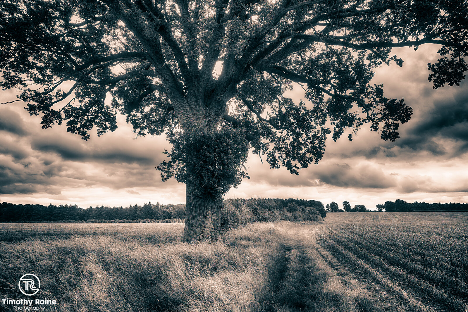 Tinted field and tree.jpg