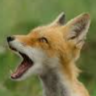 Fox Confessor
