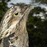 The Birdy