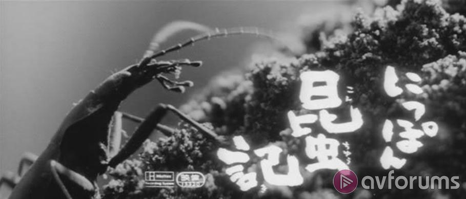 The Insect Woman Blu-ray Review