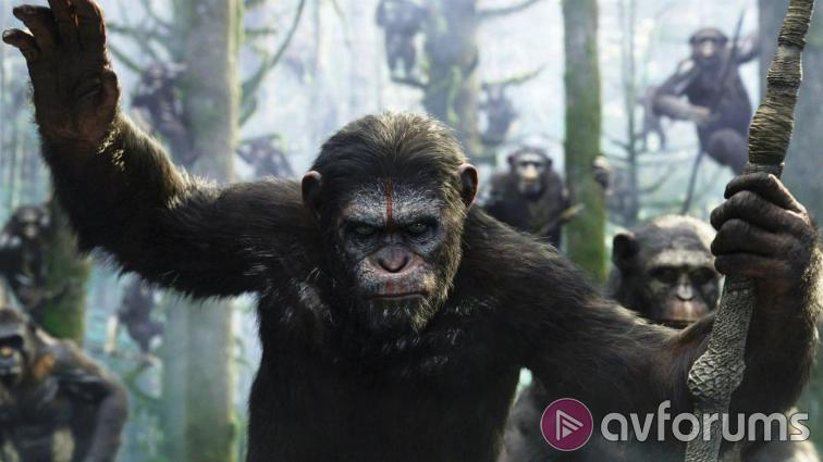 Dawn of the Planet of the Apes Blu-ray Picture Quality