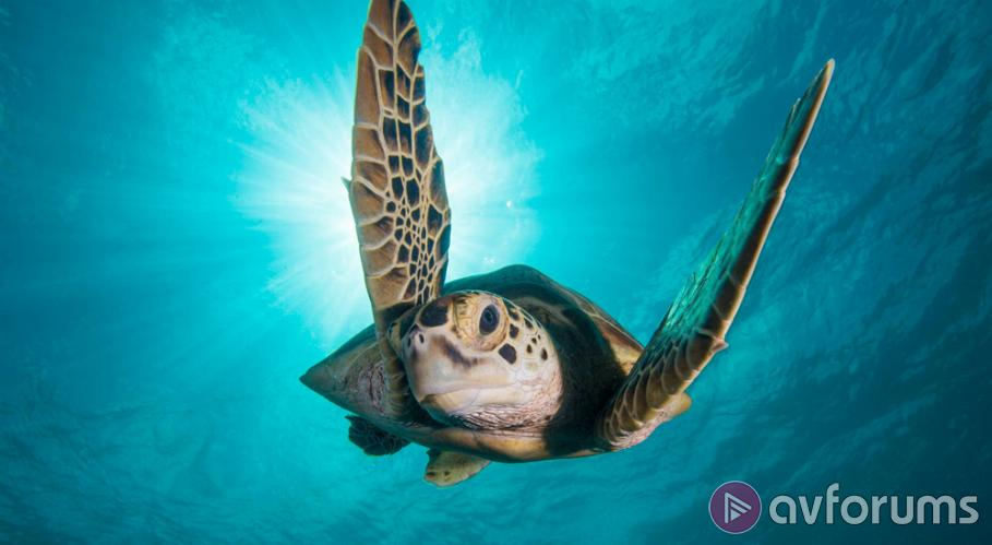 Blue Planet II Ultra HD Blu-ray Review