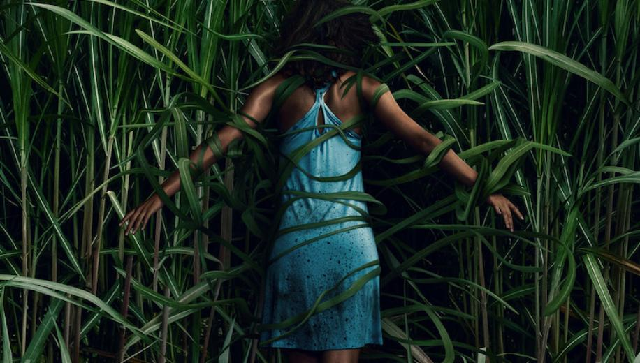 Netflix's In the Tall Grass Review