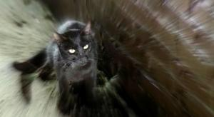 The Black Cat Movie Review