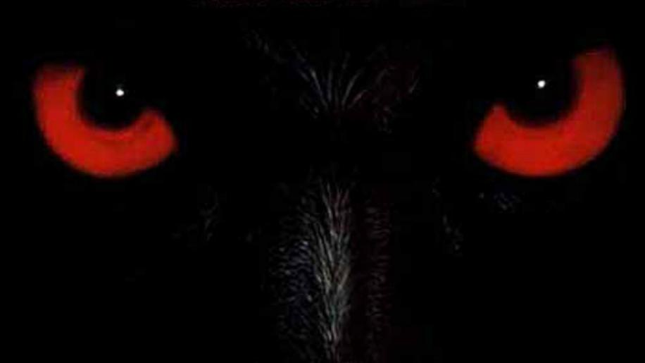 Wolfen DVD Review
