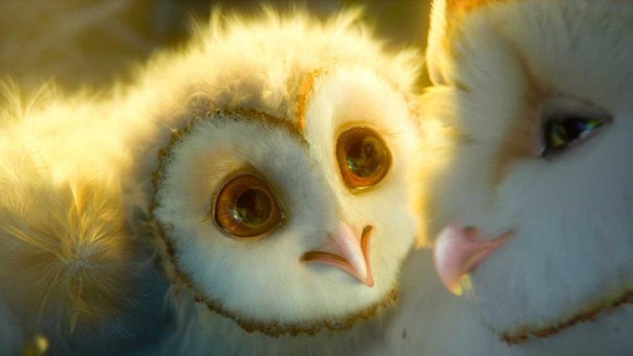 Legend of the Guardians: The Owls of Ga'Hoole Review